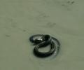 Tarhakäärme vedessä